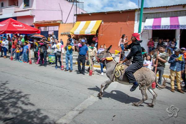Carrera de burros